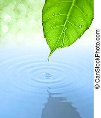 blad, droppe, vatten, grön, falla, krusning