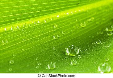 blad, druppels, groen water