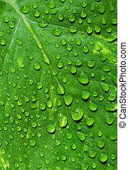 blad, druppels, water, groene