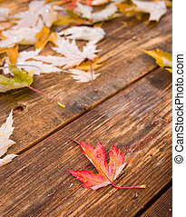 blad, esdoorn, herfst