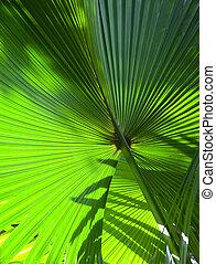 blad, groen boom, op, palm, afsluiten