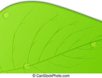 blad, groene achtergrond