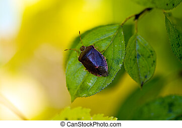 blad, insect