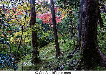blad, kleurrijke, binnen, hout, heuvel, japan