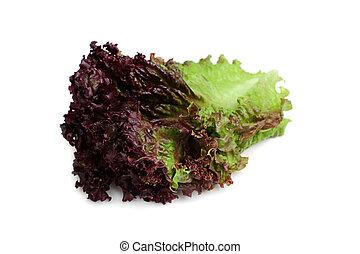 blad, lettuce., rood