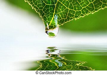 blad, liten droppe, över, vatten