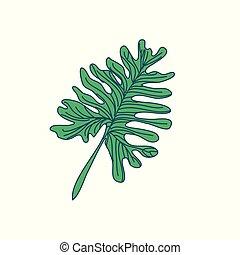 blad, lobed, tilfældig, illustration, hånd, tropisk, stram