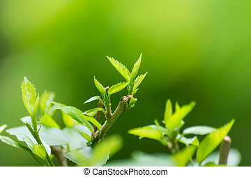 blad, natuur, abstract, groene achtergrond, aanzicht