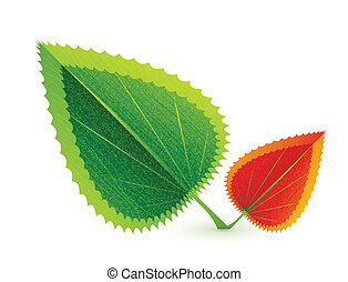 blad, natuur, concept., abstract, vector, symbool
