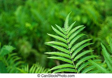 blad, natuur, op, groene achtergrond, afsluiten, grit