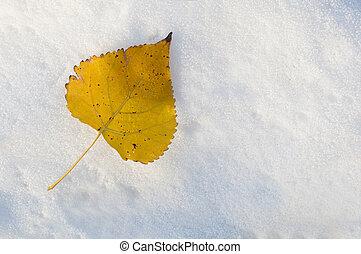 blad, op, de, sneeuw