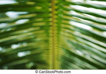 blad, op, palm, achtergrond, afsluiten, groene