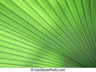 blad, op, textuur, groene, afsluiten, palm