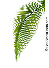 blad, palmboom