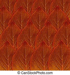 blad, rode achtergrond, herfst