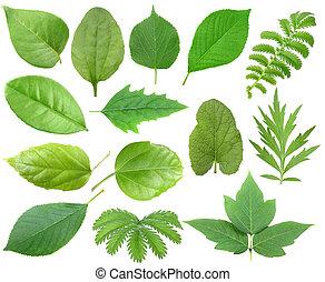 blad, set, groene