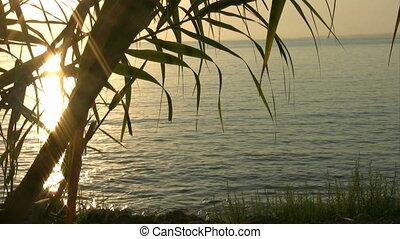 blad, silhouetted, op, ondergaande zon