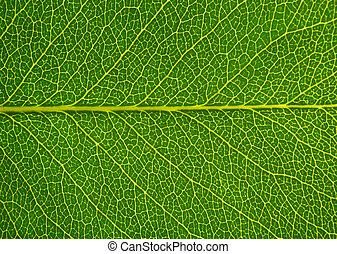 blad, textuur