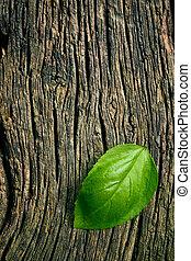 blad, trä, basilika, grön fond, grungy