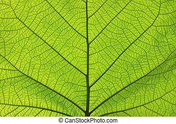blad, uppe, struktur, grönt ådrar, nära, ytterlighet