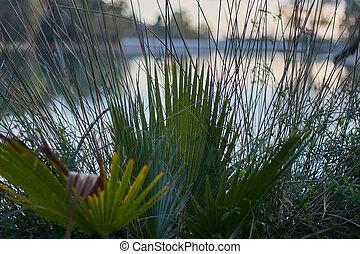 blad, varenblad, palmetto, zaag, meer, spanje, palm, macro, andalusia