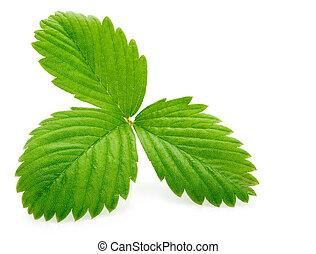 blad, vrijstaand, aardbei, enkel, groen wit