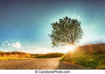 blad, zon, boompje, volgende, herfst, laag, straat, het glanzen