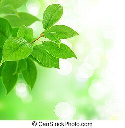 blade, frisk, grønne, smukke