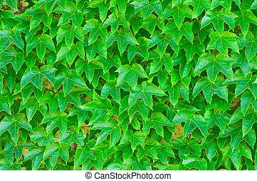 blade, grøn baggrund