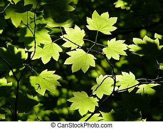 blade, grønne