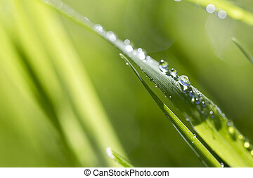 Blade of grass in morning dew
