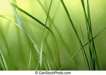 inside the grass