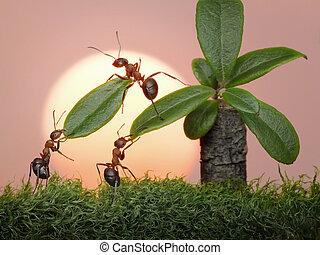 bladen, arbete, myror, palm, lag