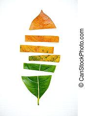bladen, av, olik, ålder, av, jack, fruktträd, vita, trä,...