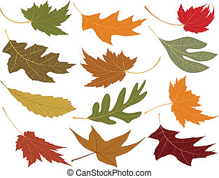bladen, blåst, vind fall