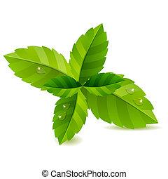 bladen, isolerat, grön fond, frisk, vit, mynta