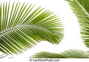 bladen, palm trä