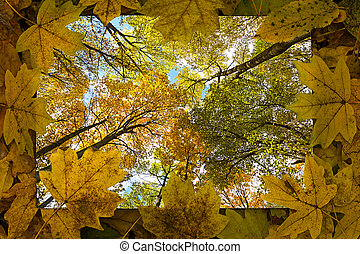 bladen, ram, skog, bakgrund