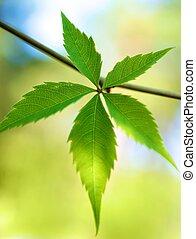 bladeren, abstract, groene achtergrond, fris, op