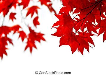 bladeren, achtergrond, herfst