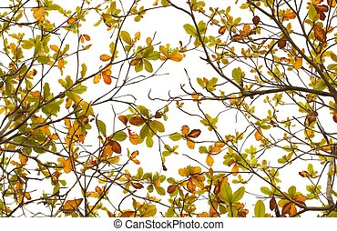 bladeren, achtergrond