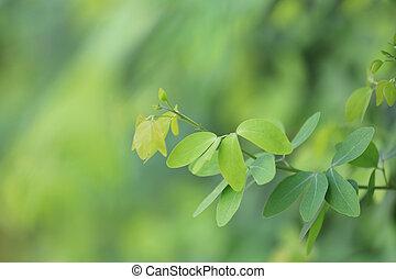 bladeren, achtergrond, tamarinde, work., groene, ontwerp, natuur, tuin, u