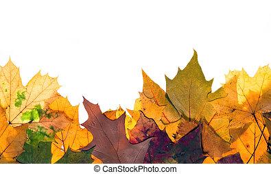 bladeren, autum, kleurrijke