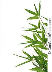 bladeren, bamboo-
