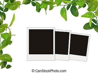 bladeren, boompje, foto's, groene, leeg, frame