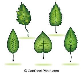 bladeren, boompje, vrijstaand, verzameling, achtergrond, witte