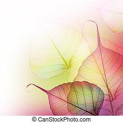 bladeren, border., mooi, floral