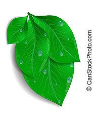bladeren, bos, groene, waterdrops