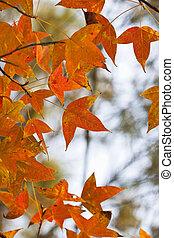 bladeren, bos, rood