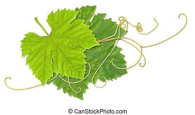 bladeren, druif